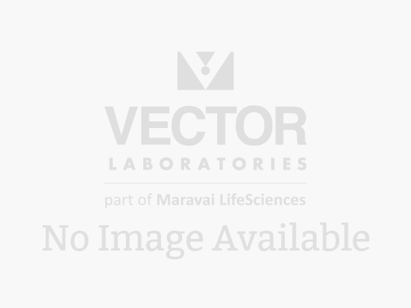 Western blot visualized by using the VECTASTAIN® ABC-AmP™ kits. Serial dilutions (1:2) of maltose binding protein (MBP) were resolved by electrophoresis on a 12% PAGE reducing gel, transferred onto nitrocellulose membrane and detected with biotinylated an