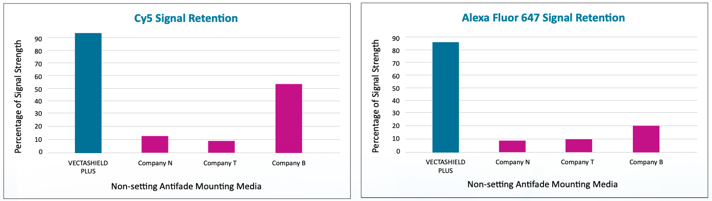 Vectashield Plus shows high percentage of signal retention after 1 hour