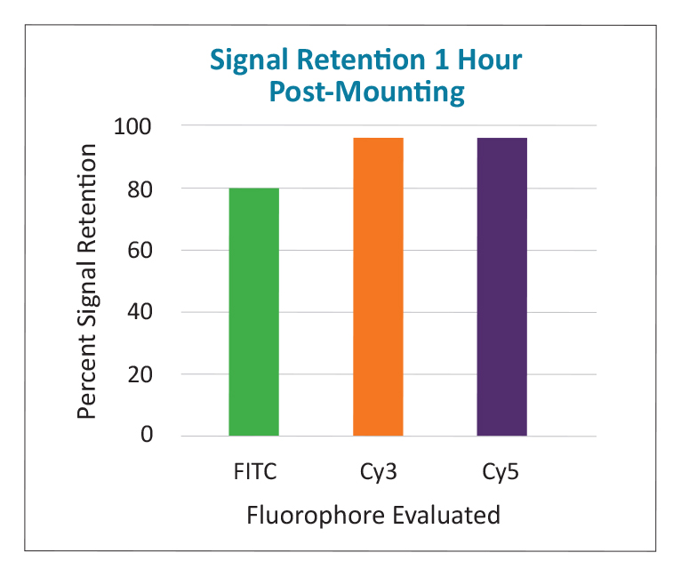 Vectashield Plus shows strong signal retention with 3 different fluorophores after 1 hour post-mounting