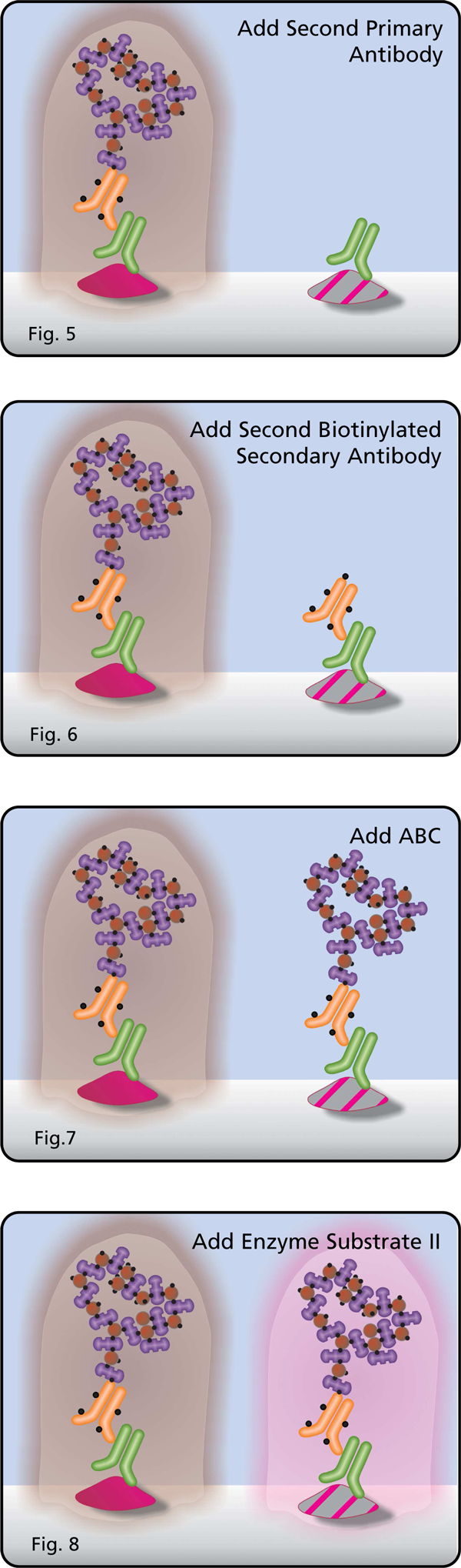 Add First Primary Antibody