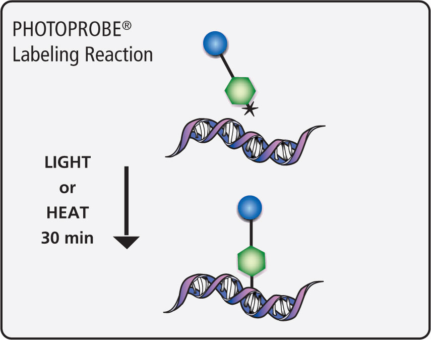 PHOTOPROBE® Labeling Reaction