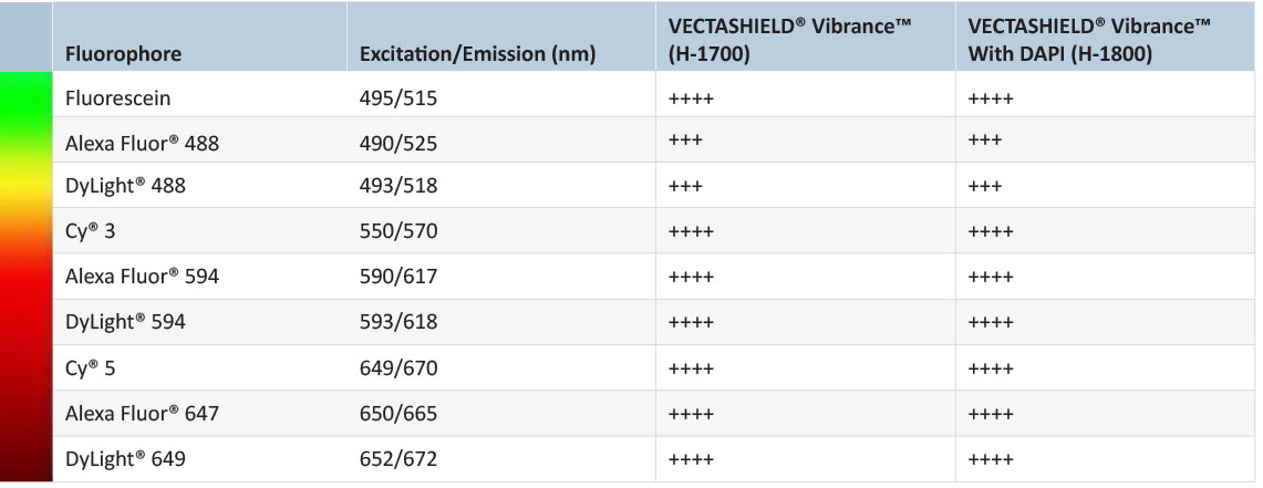 Excellent antifade properties of VECTASHIELD® Vibrance™ Mounting Media
