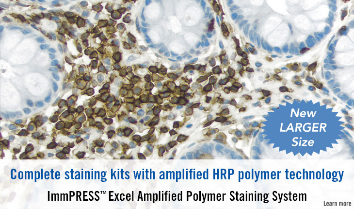 ImmPRESS Excel Amplified Staining System