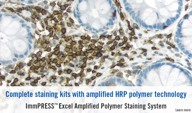 ImmPRESS Excel Amplified Polymer Staining System