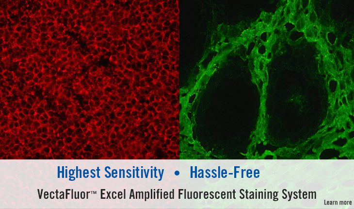 VectaFluor Excel Amplifed Fluorescence Staining System